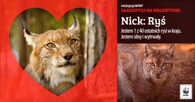 Walentynkowa Adopcja WWF