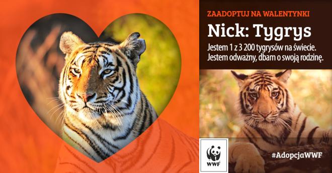 Walentynki WWF Polska