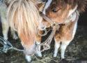 fundacja konie